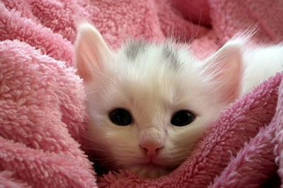 Cats Fur Animals Cute Cat Fluffy Cat Kitten